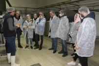 MYO Öğrencileri Süt Ürünleri Yapımının İnceliklerini Öğrendi