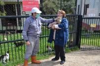 OSMANGAZI BELEDIYESI - Osmangazi'de 493 Sokak Hayvanı Sıcak Yuvaya Kavuştu