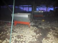 Tavuk Çiftliğinde Çıkan Yangında 25 Bin Civciv Telef Oldu