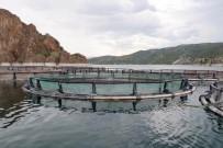Bozkırda Yetişen Alabalıklar Uzakdoğu'ya İhraç Ediliyor
