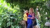 'Ejder Meyvesi' Tanesi 7 Liradan Satılıyor
