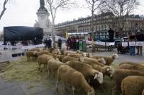 FRANSA - Paris'in göbeğinde koyunlu gösteri