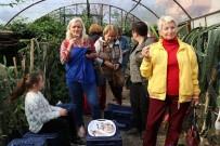 Pitaya Bahçesi Servet Kazandırıyor