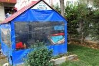 AVCILAR BELEDİYESİ - Avcılar'da Sokak Hayvanları İçin Hazırlıklar Tamamlandı