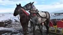 VAN GÖLÜ - Çıldır Gölü'nün Atlı Kızakçıları Kış Sezonunu Açtı