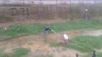 Dereye düşen köpek için seferber oldular