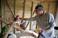 AMAZON - Kaçak Papağanlar Karşıyakalı Oldu