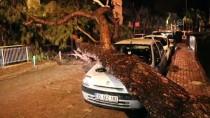 ÇAM AĞACI - Yerinden Sökülen Ağaç Otomobilin Üzerine Devrildi