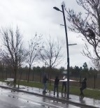 YAVRU KEDİ - Ağaçta Mahsur Kalan Kediyi Çarşafla Kurtardılar