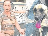TEMİZLİK GÖREVLİSİ - Sokak köpeği yakalattı! O sapığın cezası belli oldu…