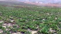 Yağışlardan Dolayı Pancar Sökemeyen Çiftçi Mağdur Oldu