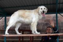 MADEN OCAĞI - AFAD'ın Hayat Kurtaran Köpeği 'Pasha' Başarıya Doymuyor
