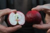 ENVER YıLMAZ - 'İçi Ve Dışı Kırmızı Elma' Tescillendi