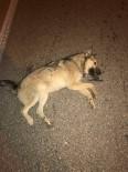 BAĞBAŞı - Vicdansız Sürücü Köpeğe Çarpıp Arkasına Bakmadan Kaçtı
