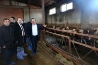 Vali Pehlivan Besi Ve Süt Hayvancılığı İşletmesini Ziyaret Etti