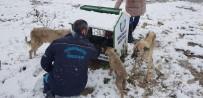 Karda Aç Kalan Hayvanlar İçin Belediye Seferber Oldu