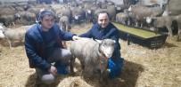 Keçiler Kuzulara Annelik Yapıyor
