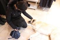 Soğukta Üşüyen Köpekler Mağazada Isınıyor