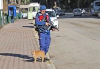 SOKAK KEDİSİ - Sokak Kedisi Denetim Yapan Jandarmanın Yanından Ayrılmadı