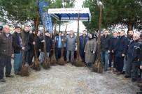 Kandıra'da 100 Çiftçiye 6 Bin Ceviz Fidanı Dağıtıldı