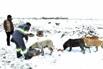 ORMAN VE SU İŞLERİ BAKANLIĞI - Konya Büyükşehir Sahipsiz Ve Doğal Hayattaki Hayvanlara Yem Bıraktı