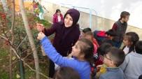 Öğrenciler, Kuşlar İçin Ağaçlara Yem Astı