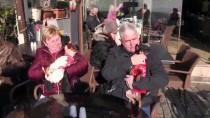 ALTıNKUM - Sokak Hayvanları İçin Kış Ortasında Denize Girdiler