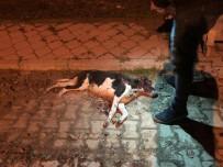 KOCABAŞ - Sokak Ortasında Silahla Vurduğu Köpeği Çöp Konteynerine Attı