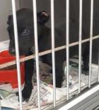 YAVRU KÖPEK - 2 Aylık Yavru Köpeğin Kulaklarını Kesip Sokağa Attılar