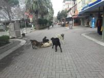 Erdek'te Vatandaşlar Başı Boş Köpeklerden Tedirgin