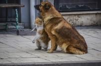 SOKAK KÖPEĞİ - Kastamonu'da Kedi Ve Köpeğin Dostluğu Görenleri Şaşırttı