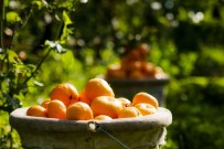 EGE İHRACATÇı BIRLIKLERI - Yaş Meyve Sebze Ve Mamulleri İhracatında Tarihi Rekor