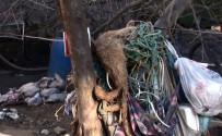 SOKAK KÖPEĞİ - 30'Un Üzerinde Köpekle Tek Göz Odada Yaşayan Kadın Gözaltına Alındı