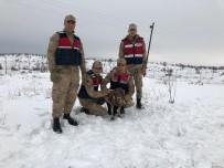 Diyarbakır'da Yaralı Akbaba Donmak Üzereyken Bulundu