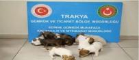 YAVRU KÖPEK - Kapıkule'de Yurda Kaçak Sokulmak İstenen 20 Yavru Köpek Bulundu