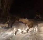 ERKMEN - Aç Kalan Onlarca Domuz Sürüsü Kasabaya İndi