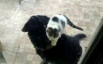 Kedi İle Köpeğin İlginç Dostluğu