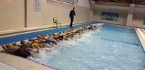 Kilis'te 'Yüzme Bilmeyen Kalmasın' Projesi