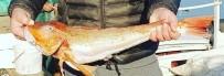 KIRLANGIÇ - Kırlangıç Balığı Ağlara Takıldı