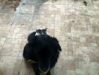 (Özel) Kedi İle Köpeğin İlginç Dostluğu
