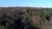ÇAM AĞACI - (Özel) Yılbaşı Öncesi Kaçak Çam Ağacı Kesenlere Göz Açtırılmıyor
