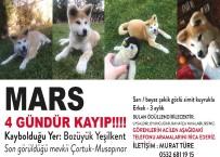 YEŞILKENT - Kayıp Köpeği İçin Bilbordlara İlan Verdi