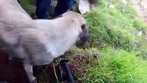 YAVRU KÖPEK - Anne Köpek Ve Yavrularına Hayvanseverler Sahip Çıktı