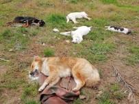 Trabzon'da Sokakta Yaşayan 8 Köpek Ve 2 Kedi Ölü Bulundu