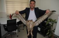 Cizre'de Nesli Tükenmekte Olan Boynuzlu Baykuş Bulundu