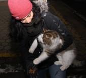 Herkes Yeni Yılı Kutlarken Onlar Sokak Hayvanlarını Unutmadı