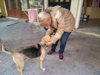Otansev, 'Karnı Doyurulan Köpek Çevreye Zarar Vermez'
