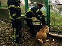 MALTA - Mahsur Kalan Kedi Ve Köpeğin İmdadına İtfaiye Ekipleri Yetişti