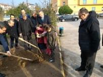 SERKAN KEÇELI - Minik Eller Okullarının Bahçesine Fidan Dikti