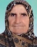 Yaşlı Kadını Öldüren Ayı Bulunamayınca İtlaf Kararı Sonlandırıldı